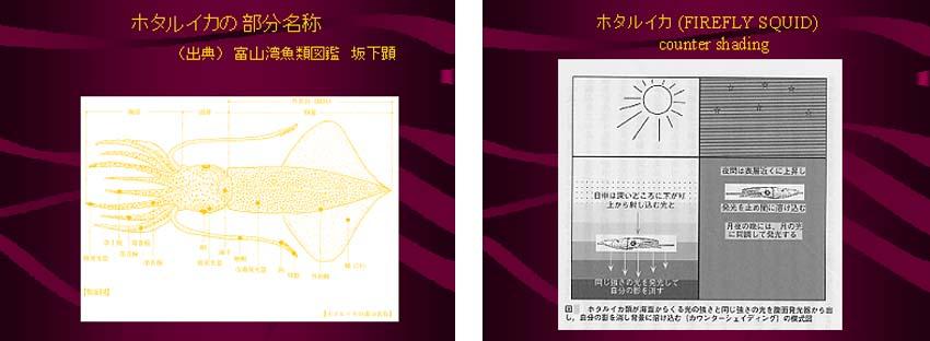 第10回 図5-6.jpg