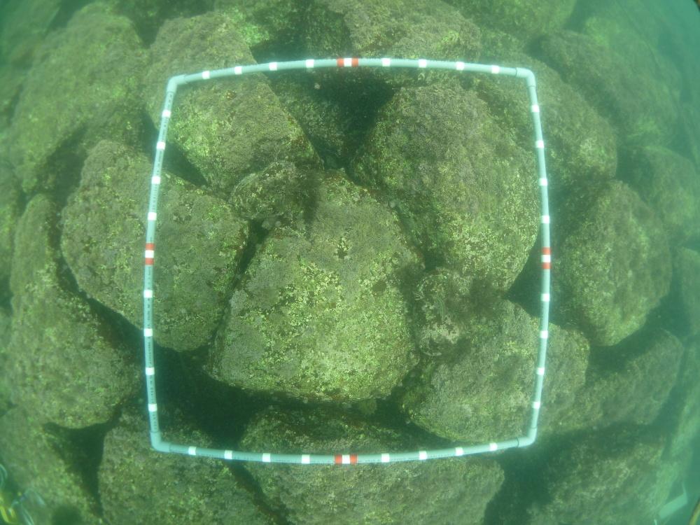 2014.07.23海老江 海藻移植 001.jpg
